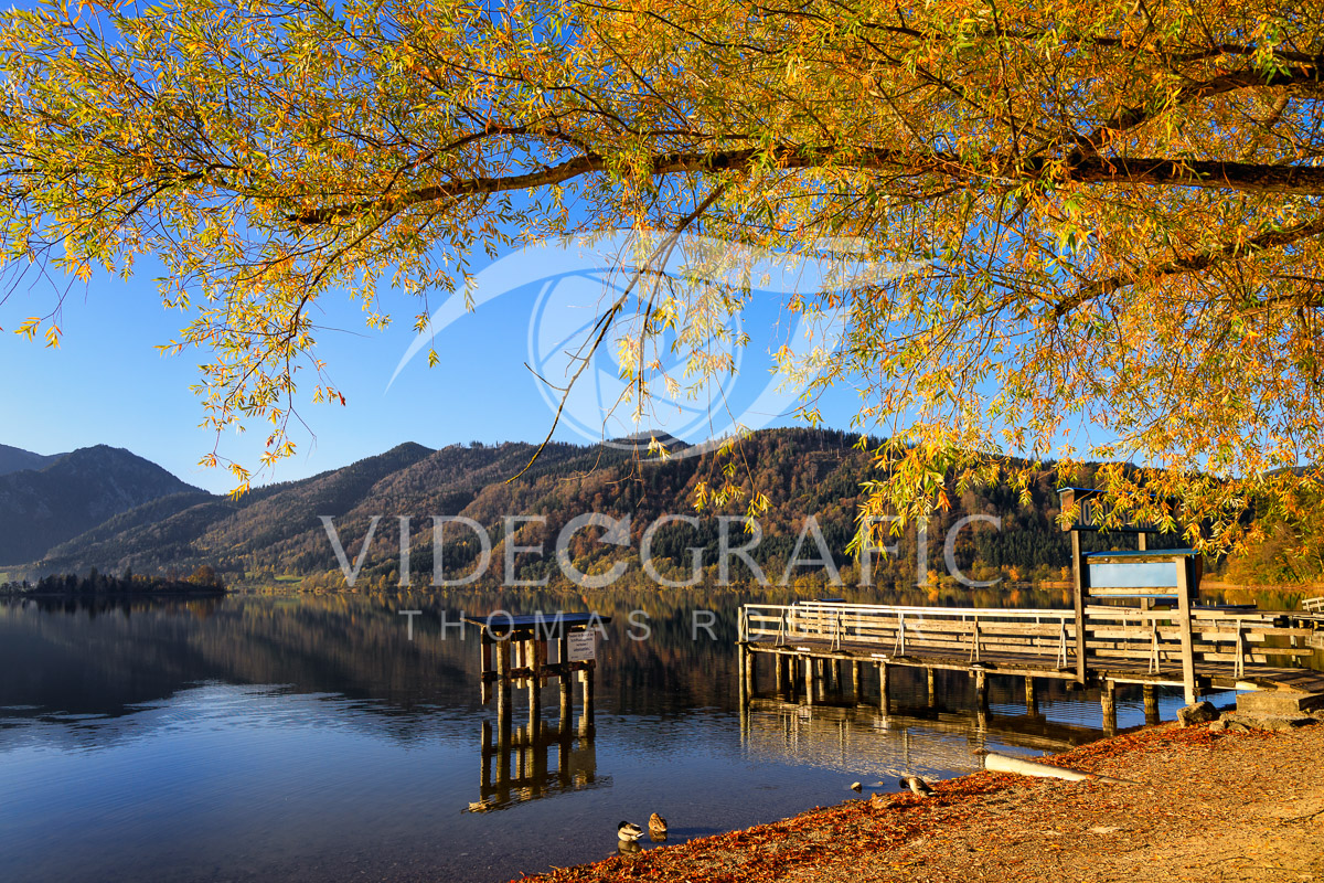 Golden-Autumn-004.jpg
