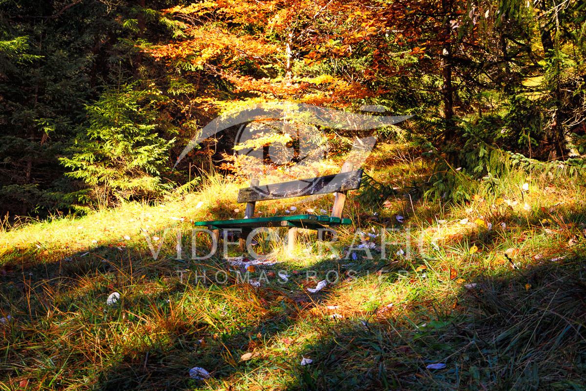 Golden-Autumn-005.jpg