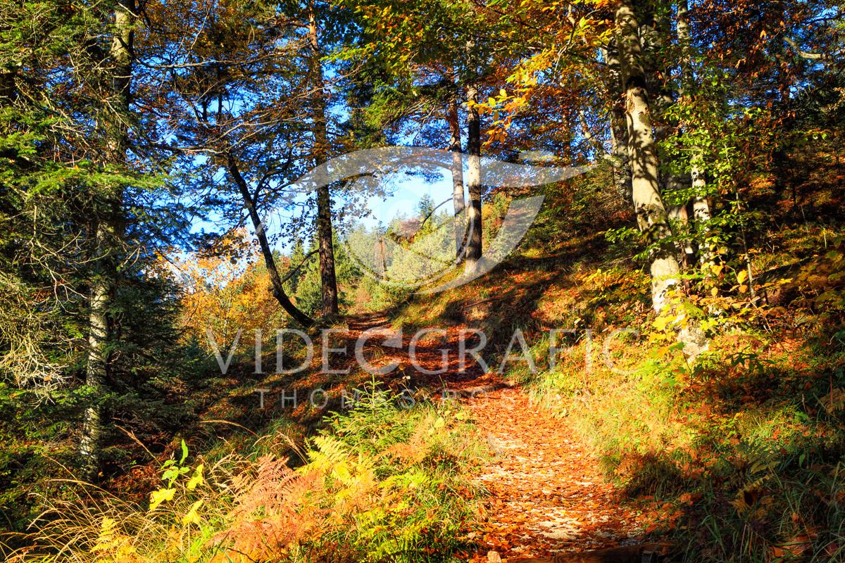 Golden-Autumn-006.jpg