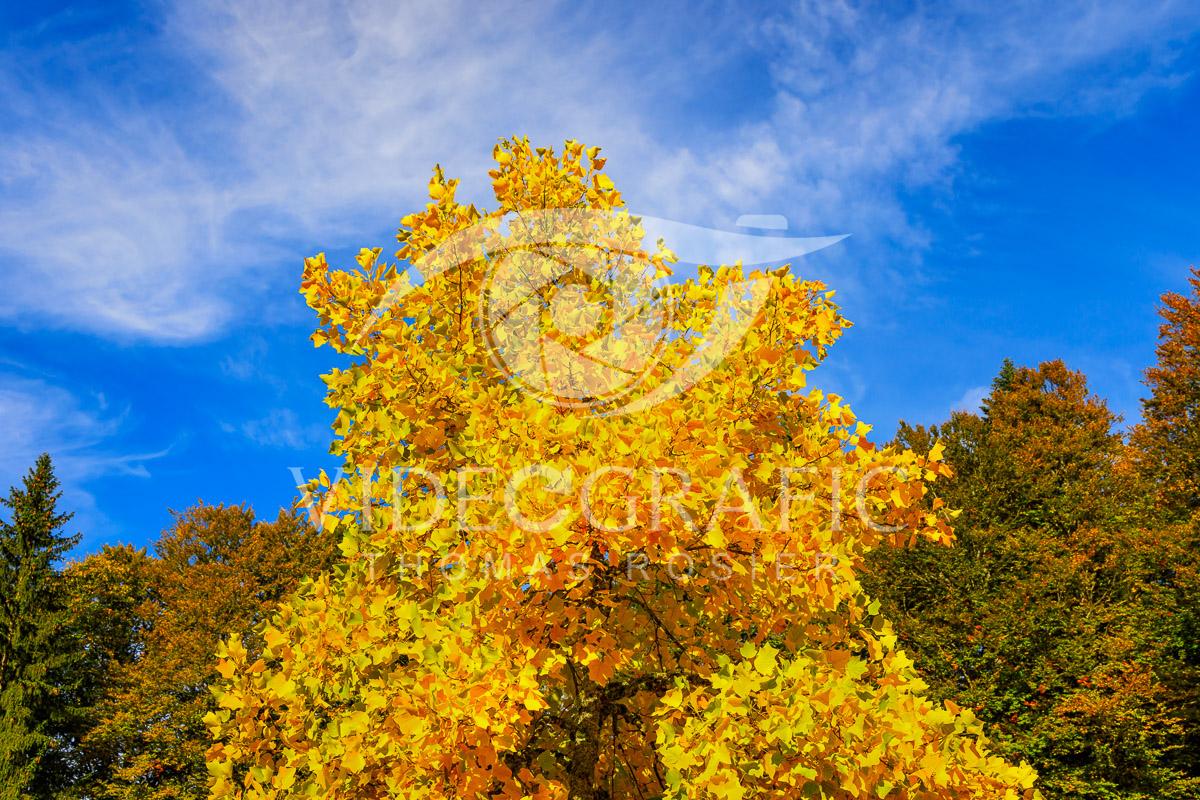 Golden-Autumn-040.jpg